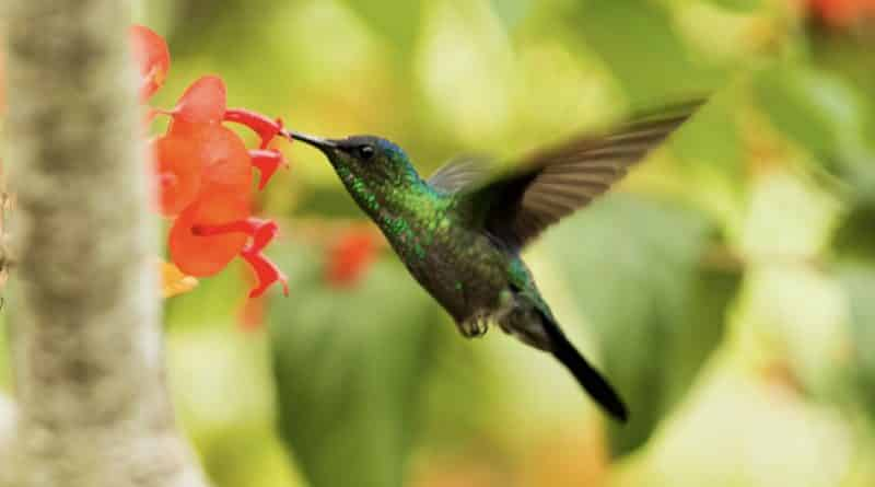 how to make hummingbird food at home